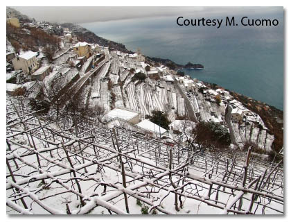 Marisa Cuomo, Vineyards in Winter