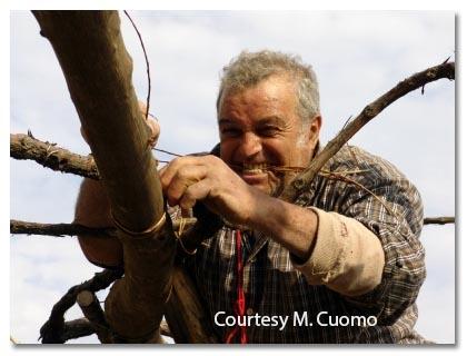Zio Luigi working in the vineyard