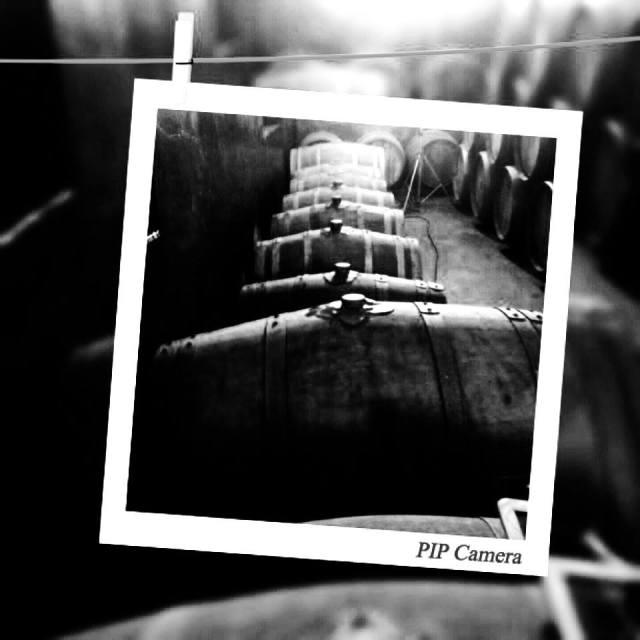 Chianti barrels (courtesy of Consorzio Vini Chianti)