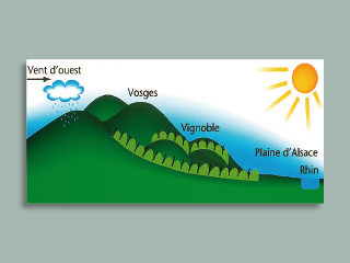 Alsace Vineyards - Courtesy of Vins d'Alsace (click on image to go to website)