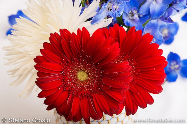 Red, Blue and White flowers